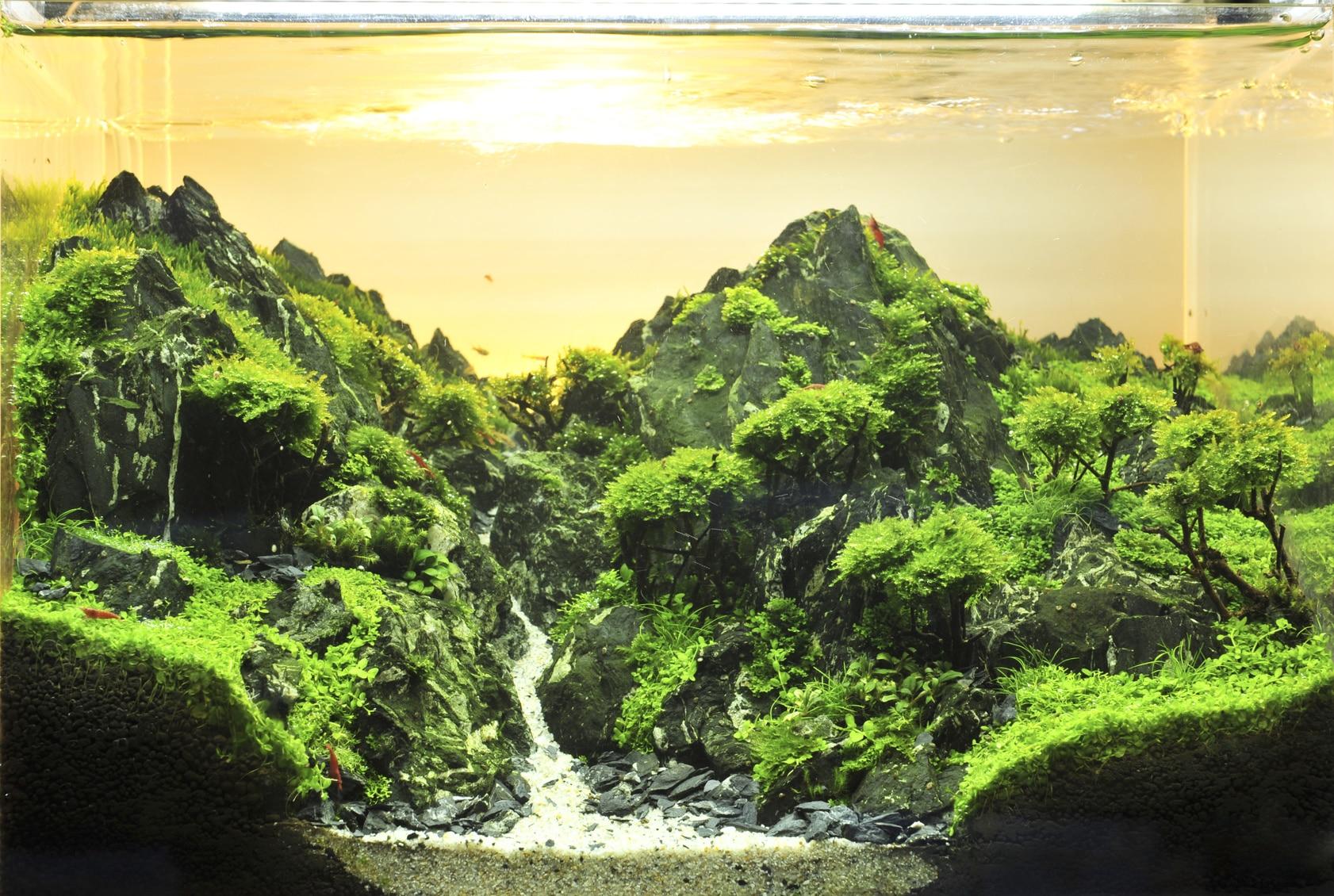   Live aquarium plants , aquascaping stone .....