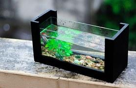 Nano Aquarium Live Aquarium Plants Aquascaping Stone
